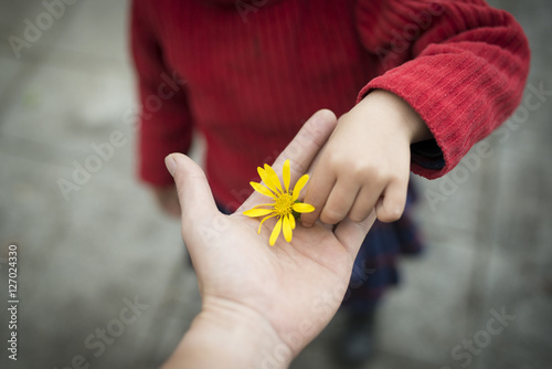 Obraz 黄色い花を手渡す親子の手 - fototapety do salonu