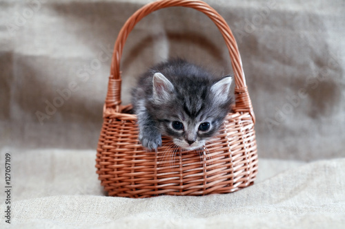 Photo Kitty In Basket