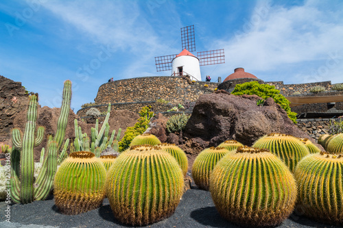 View of cactus garden in Guatiza village, Lanzarote, Canary Islands, Spain