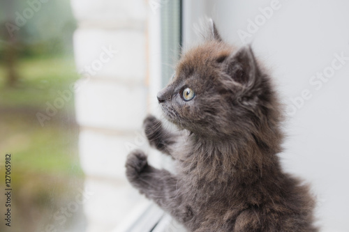 Valokuva Grey cat sitting near window