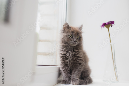 Fotomural  Grey cat sitting near window