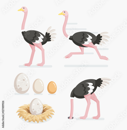 Cuadros en Lienzo Ostrich and ostrich eggs on the nests. Vector illustration flat