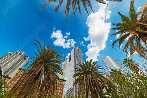 Staande foto Los Angeles palm trees in Los Angeles