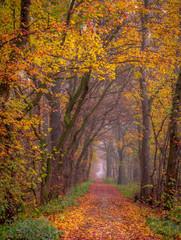 Fototapeta Współczesny Colors of Atumn forest