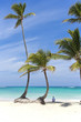 Relaxing on the beach under a palm tree