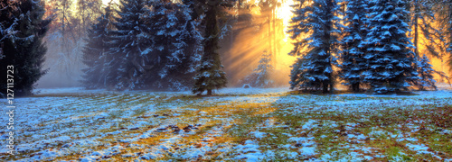 Fototapety, obrazy: Morning sunrays in winter forest
