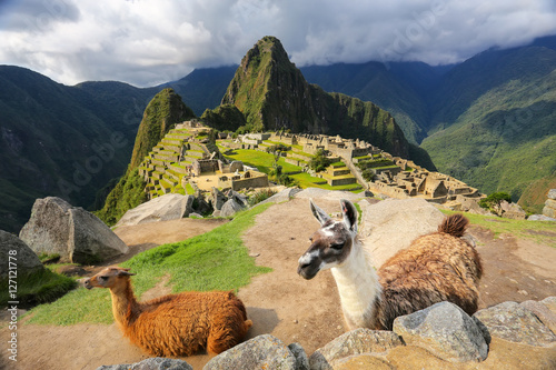 Obraz na plátně Llamas standing at Machu Picchu overlook in Peru