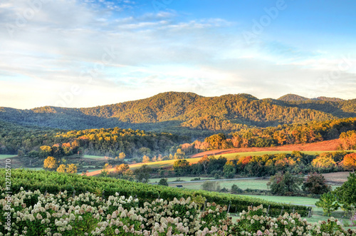 Fotografie, Obraz  Autumn vineyard hills and flowers during sunset in Virginia