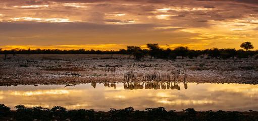 Fototapeta na wymiar Zebras at waterhole at sunset