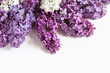 Floral wallpaper, beautiful lilac flowers bouquet for greeting cards, decoration