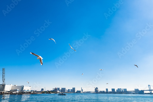 Cadres-photo bureau Turquie かもめが舞う港の風景 東京湾