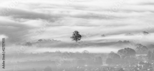 Aluminium Prints Autumn Lone tree surrounded by a layer of thick lingering fog in valley.