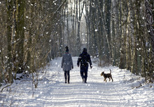 Couple In The Winter Woods On A Walk With The Dog