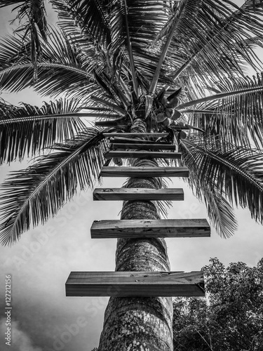 wejscie-na-palme-kokosowa-drewniane-szczeble