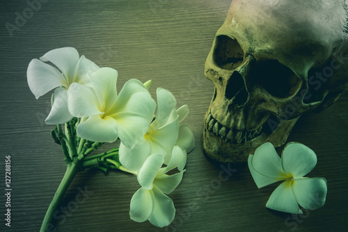 still-life-with-a-skull-and-plumeria