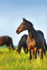 Horse standing against herd on spring pasture
