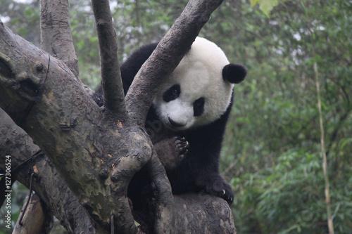 Stickers pour portes Panda Baby Panda