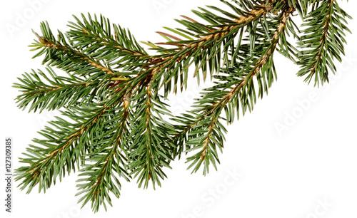 Fotografía  Christmas tree. fir tree.