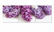Lilac flowers posters, floral canvas collage, interior decor mock up