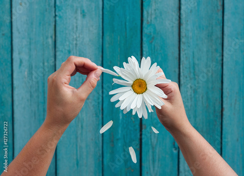 Foto op Canvas Madeliefjes Two female hands hold in hand big white daisy petals and tear