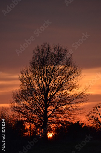 Aluminium Prints Autumn Tree Silhouette Sunset