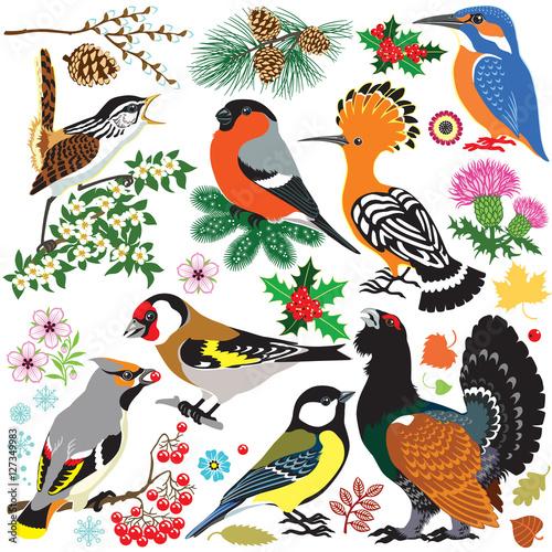 set of European  wild birds Fototapet