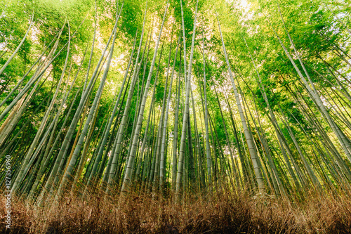 In de dag Bamboo Beautiful bamboo forest at Arashiyama touristy district , Kyoto, Japan