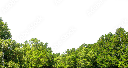 Foto  Green leaves tree isolated on white background