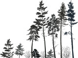 high pine forest black silhouettes on white - 127375953