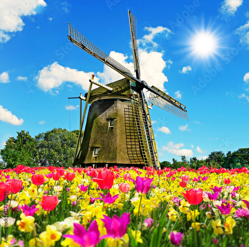 Gre aus holland greeting from the netherlands buy this stock gre aus holland greeting from the netherlands m4hsunfo