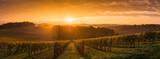 Vineyard Sunrise - Bordeaux Vineyard - 127397973