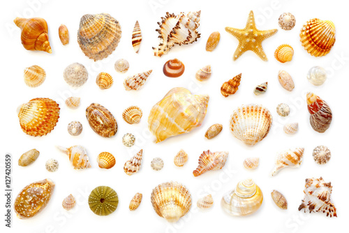 Photo composition of exotic sea shells and starfish on a white background