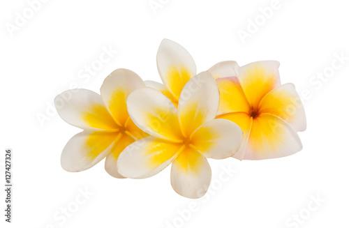 Stickers pour porte Frangipanni frangipani flower isolated