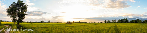 Photo panoramic golden rice field with the blue sky, beautiful rice field with mountai