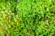 Small Moss Flower In Green Texture