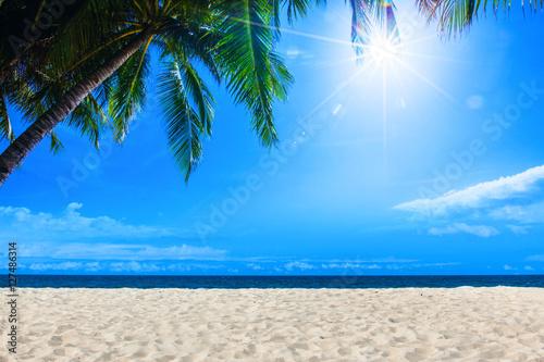 Papiers peints Plage Palm and tropical beach