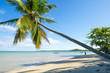 Tall slanted palm trees cast shadows on wide remote tropical Brazilian island beach in Bahia Nordeste Brazil