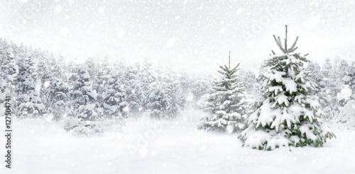Tannenbäume bei Schnee am Waldrand, helle Szene im Panorama Format für Weihnacht Poster