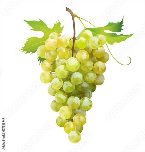 Fotografia, Obraz  Ripe grape isolated on white. Vector illustration.