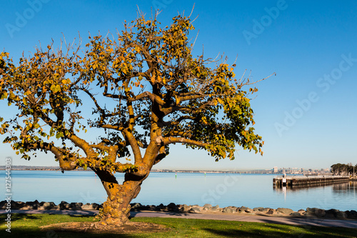 Fotografie, Obraz  Coral tree in the golden light of an autumn morning at Chula Vista Bayfront park with fishing pier and San Diego Bay in the background