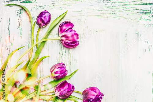 lovely-purple-tulips-bunch-on-white-wooden-background-spring-flowers-concept-floral-border