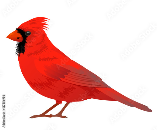 Northern Cardinal bird Wallpaper Mural