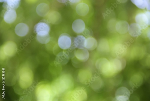 Fototapety, obrazy: Bokeh natural color background, colorful  leaf of the tree