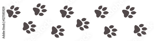 Obraz Paw prints, animal tracks on a white isolated background. Steps animal drawn for the design of backdrops. - fototapety do salonu