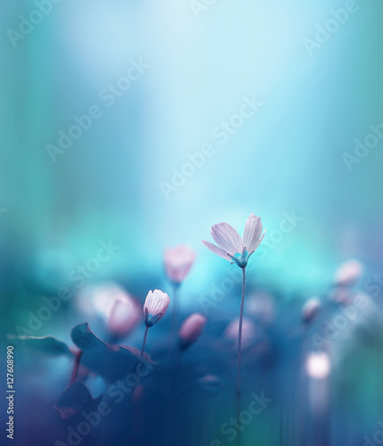 Poster Lente Spring forest white flowers primroses on a beautiful blue background. Macro. Blurred gentle sky-blue background. Floral background desktop wallpaper a postcard. Romantic soft gentle artistic image.