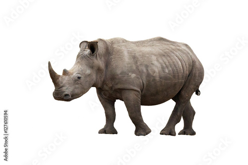 Spoed Foto op Canvas Neushoorn Rhinoceros isolated