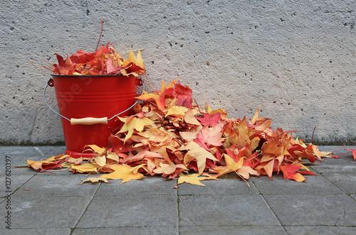 Photo  recogiendo hojas secas otoño U84A9578-f16
