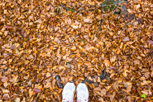 Top View Of Shoes Standing In Dry Leaves On Entering The Fall Season. / Walking In    Autumn Forest Background.