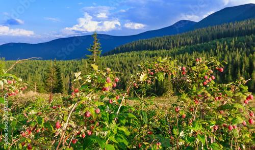 wild-raspberries-and-summer-carpathians