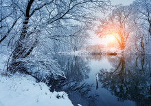 Beautiful Winter In Forest On ...